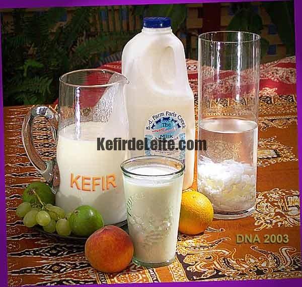 Kefir um Probiótico Complexo
