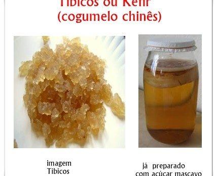 Tibicos ou Kefir de Agua