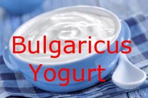 Bulgaricus-Iogurte