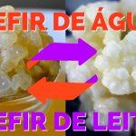 Kefir-de-Leite-Kefir-de-Água-Comprar